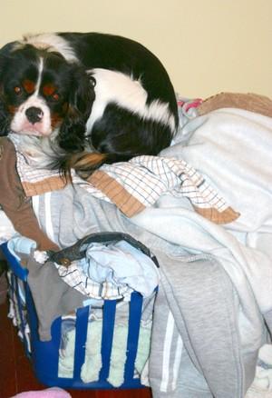 Washing_dog