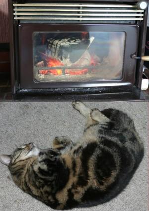Fire_n_cat