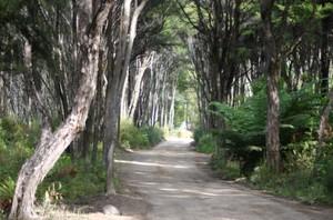 Manuka_walkway